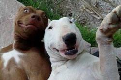 Il selfie può essere dannoso
