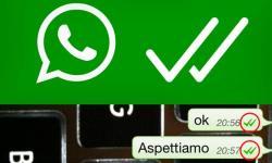 WhatsApp, arriva la conferma di effettiva lettura